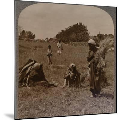 'Ruth gleaning in the Fields of Boaz', c1900-Unknown-Mounted Photographic Print