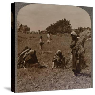 'Ruth gleaning in the Fields of Boaz', c1900-Unknown-Stretched Canvas Print
