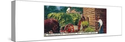 'Delivering Tobacco at Curing Barn', 1926-Unknown-Stretched Canvas Print
