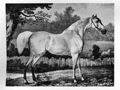 'Gimcrack', 1760 -1777, (1911)-Unknown-Framed Giclee Print