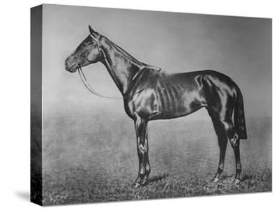 'Signorinetta', 1905-1928, (1911)-Unknown-Stretched Canvas Print
