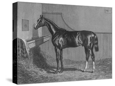 'The Rt. Hon. The Earl of Lichfields Elis. Winner of the St. Leger 1836', 1911-Unknown-Stretched Canvas Print