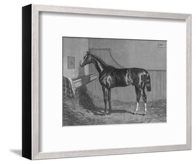 'The Rt. Hon. The Earl of Lichfields Elis. Winner of the St. Leger 1836', 1911-Unknown-Framed Giclee Print