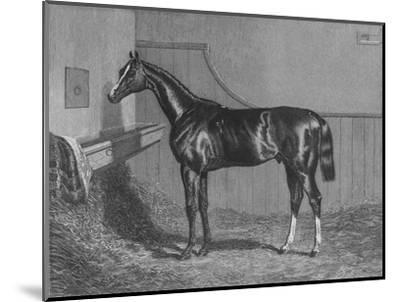 'The Rt. Hon. The Earl of Lichfields Elis. Winner of the St. Leger 1836', 1911-Unknown-Mounted Giclee Print
