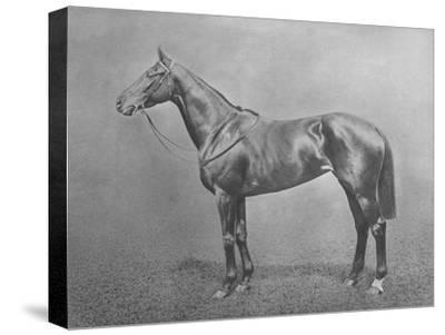 'Flair', 1911-Unknown-Stretched Canvas Print