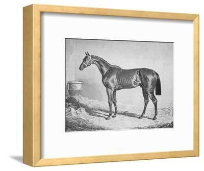 'Bay Middleton', 1833-1857, (1911)-Unknown-Framed Giclee Print