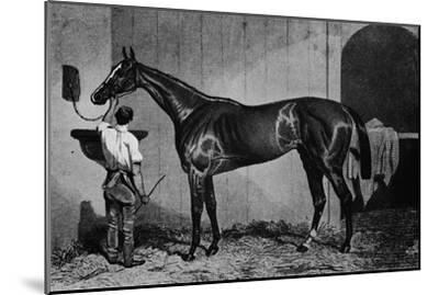 'West Australian', 1850-1870, (1911)-Unknown-Mounted Giclee Print