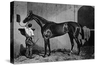 'West Australian', 1850-1870, (1911)-Unknown-Stretched Canvas Print