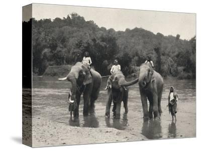 'Elefanten im Bade (Mahaaliganga)', 1926-Unknown-Stretched Canvas Print