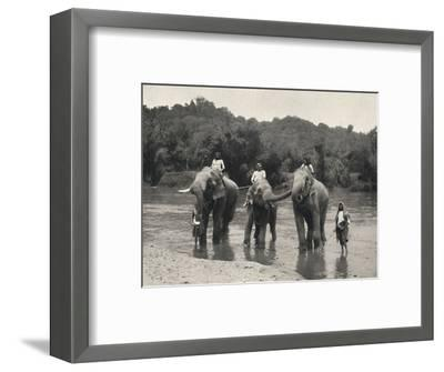 'Elefanten im Bade (Mahaaliganga)', 1926-Unknown-Framed Photographic Print