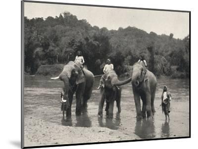 'Elefanten im Bade (Mahaaliganga)', 1926-Unknown-Mounted Photographic Print