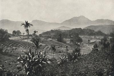 'Reisfelder in Terrasen angelegt', 1926-Unknown-Framed Photographic Print
