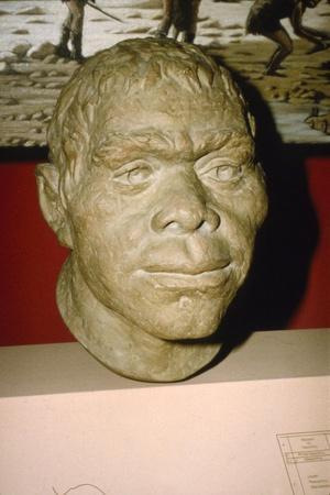 Neanderthal Man. Reconstruction of head, c20th century-Unknown-Framed Giclee Print