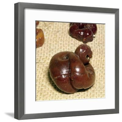 Animal in Amber, Norway, Viking Period, 9th century-Unknown-Framed Giclee Print