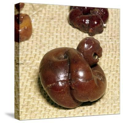Animal in Amber, Norway, Viking Period, 9th century-Unknown-Stretched Canvas Print