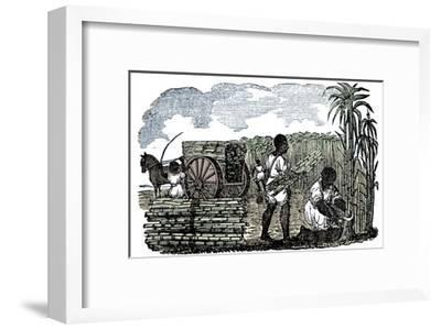 Slaves harvesting sugar cane in Louisiana, 1833-Unknown-Framed Giclee Print