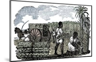 Slaves harvesting sugar cane in Louisiana, 1833-Unknown-Mounted Giclee Print