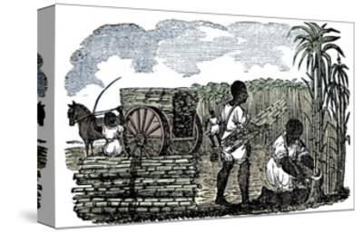 Slaves harvesting sugar cane in Louisiana, 1833-Unknown-Stretched Canvas Print