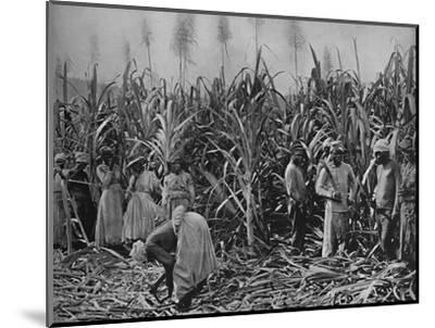 'Cane-Cutters in Jamaica', 1891-Unknown-Mounted Photographic Print