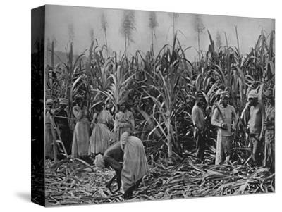 'Cane-Cutters in Jamaica', 1891-Unknown-Stretched Canvas Print