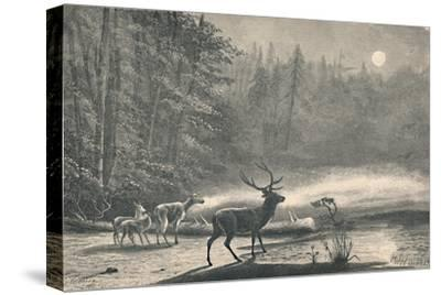 'Deer on Lake St. Regis, at night', 1883-Unknown-Stretched Canvas Print