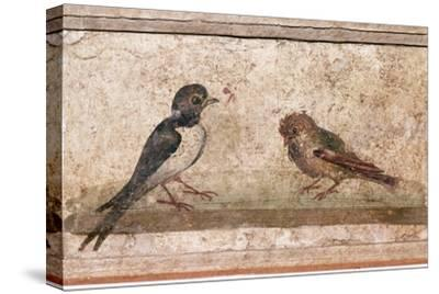 Swallow and Sparrow, Roman wall painting from Boscoreale near Pompeii, 1st century-Unknown-Stretched Canvas Print