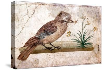 Roman wall painting of Jay from Boscoreale near Pompeii, 1st century-Unknown-Stretched Canvas Print