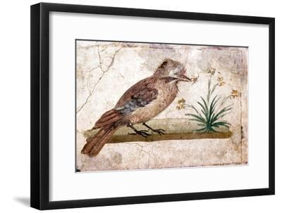 Roman wall painting of Jay from Boscoreale near Pompeii, 1st century-Unknown-Framed Giclee Print