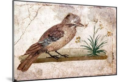 Roman wall painting of Jay from Boscoreale near Pompeii, 1st century-Unknown-Mounted Giclee Print