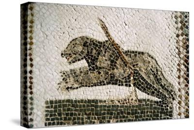 Roman Mosaic detail of Bear, from Diana the Huntress, Thuburbo Majus, Tunisia, c4th century-Unknown-Stretched Canvas Print