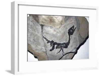 Cretaceous Dinosaur fossil, Mesozoic era-Unknown-Framed Giclee Print