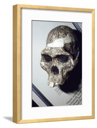 Skull of Australopithecus Africanus from Sterkfontein, South Africa, 3 to 2 million years BC-Unknown-Framed Giclee Print