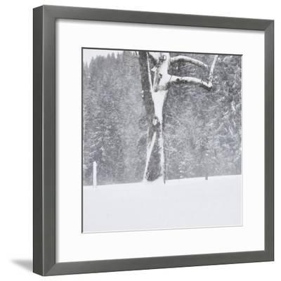 Tree, branches, snow-covered-Martin Ley-Framed Photographic Print