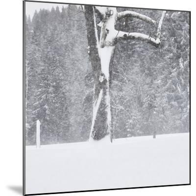Tree, branches, snow-covered-Martin Ley-Mounted Photographic Print