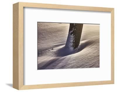 Trunk with snowdrift, light, artistically, medium close-up, detail-Martin Ley-Framed Photographic Print