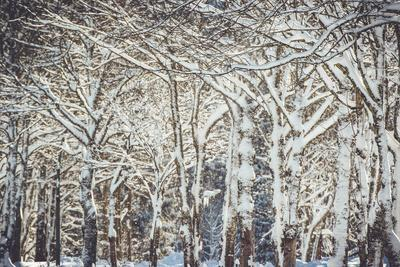 Trees, winter-Jule Leibnitz-Framed Photographic Print