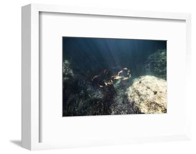 The underwater scenery all around the Mediterranean island of Formentera,-Nadja Jacke-Framed Photographic Print