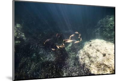 The underwater scenery all around the Mediterranean island of Formentera,-Nadja Jacke-Mounted Photographic Print