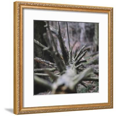 Trunk with broken branches,-Nadja Jacke-Framed Photographic Print