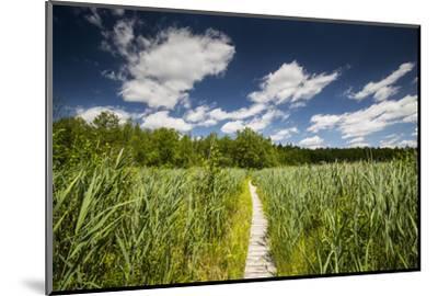 Europe, Poland, Lublin Voivodeship, Polesie National Park-Mikolaj Gospodarek-Mounted Photographic Print