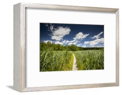 Europe, Poland, Lublin Voivodeship, Polesie National Park-Mikolaj Gospodarek-Framed Photographic Print