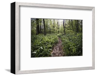On the way in the Teutoburg Forest-Nadja Jacke-Framed Photographic Print