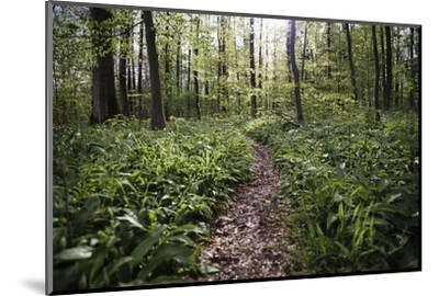 On the way in the Teutoburg Forest-Nadja Jacke-Mounted Photographic Print
