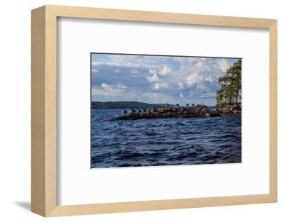 Lonesome landscape on Stora Le Lake, Sweden-Andrea Lang-Framed Photographic Print