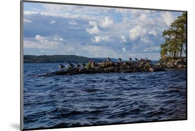 Lonesome landscape on Stora Le Lake, Sweden-Andrea Lang-Mounted Photographic Print