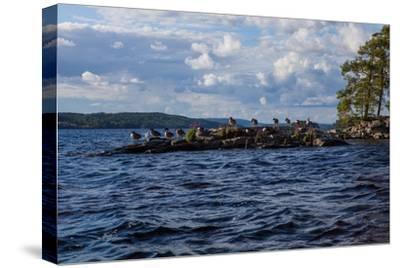 Lonesome landscape on Stora Le Lake, Sweden-Andrea Lang-Stretched Canvas Print