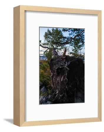 Vegetation, fallen tree, shore, Stora Le Lake, Sweden-Andrea Lang-Framed Photographic Print