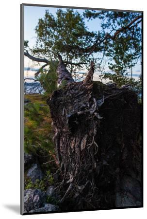 Vegetation, fallen tree, shore, Stora Le Lake, Sweden-Andrea Lang-Mounted Photographic Print