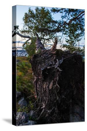 Vegetation, fallen tree, shore, Stora Le Lake, Sweden-Andrea Lang-Stretched Canvas Print