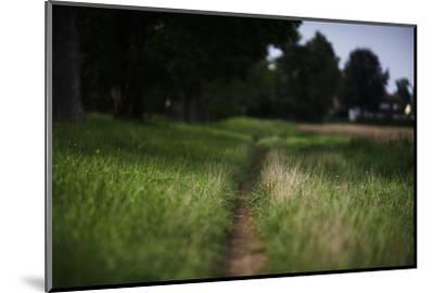 small path through a meadow-Benjamin Engler-Mounted Photographic Print